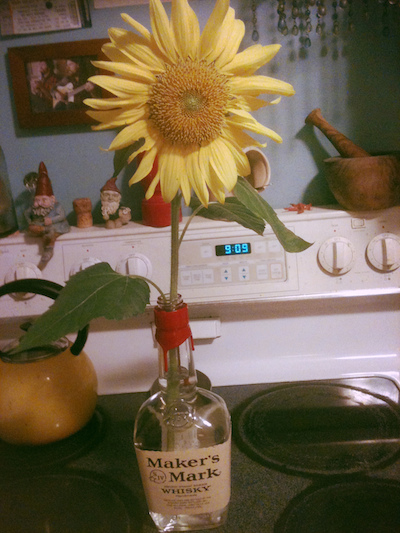 A sunflower from Leesa's garden